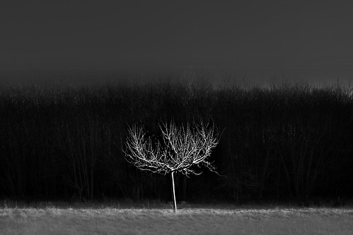 Orchard 4 | by chrisfriel