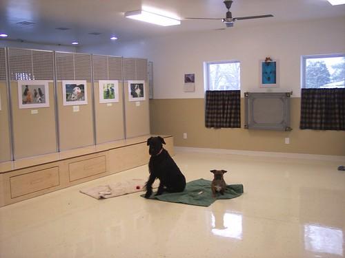 Dog Training Workshop Seminar In Farilawn Ohio