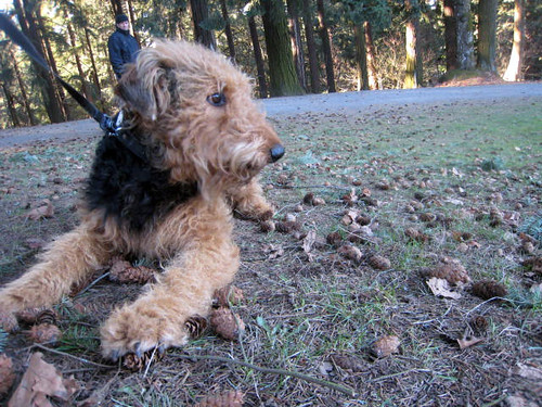 Airedale inauguration day bogart handsome devil for Hawthorne fish house
