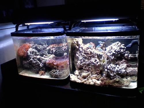 Resif Akvaryumu Kurulumu