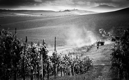 Tuscan Harvest | by neal1973