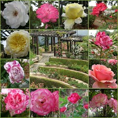 Berkeley Rose Garden | by TulipFleurs