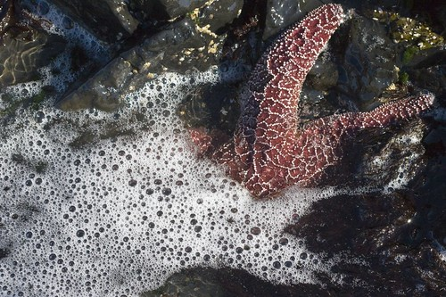 Starfish & Suds | by The Hike Guy