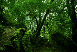 Rainforest & Moss | by Tim√