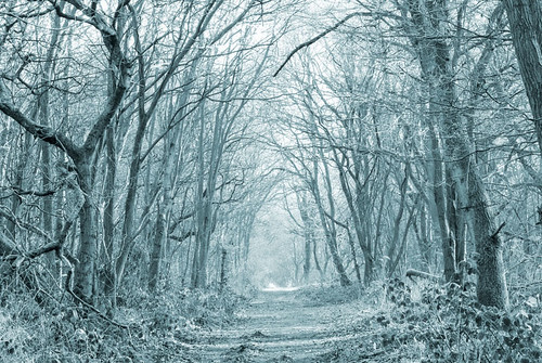 Winter-Wood-2 | by Ingleman