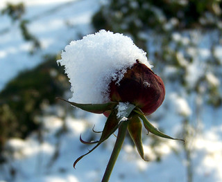 Snow Hat | by marinela 2008