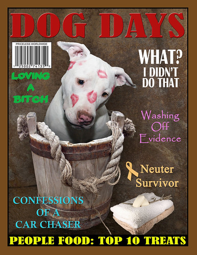 Funny Dog Days Magazine Cover Rescued White Puppy Dog Kah