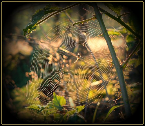 Spinne am Morgen ... | by NPPhotographie