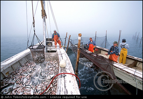 chesapeake bay commercial fishing | chesapeake bay commercia… | flickr, Fishing Bait