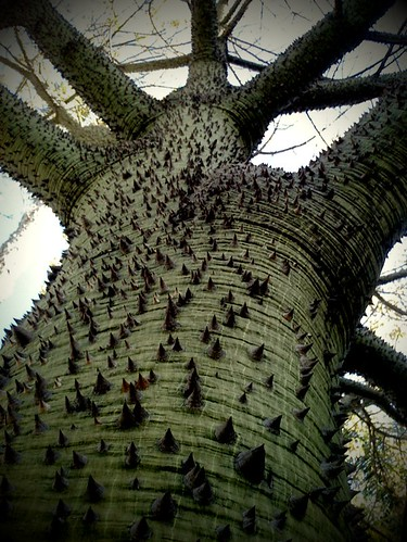Bark Spikes | by ♫~♥~Doris~♥~♫
