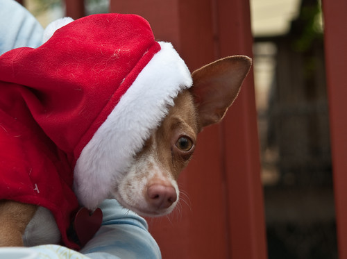 What, You've Never Seen A Dog In A Mrs. Claus Outfit?