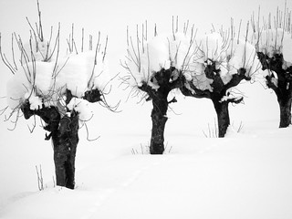 B&W Winter | by mikiitaly