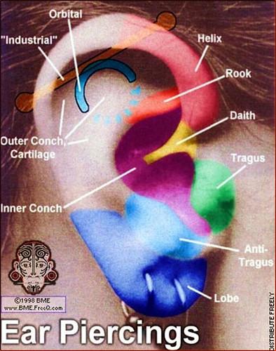 Ear Piercing Diagram Manda Flickr