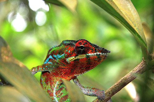 Chameleon | by my way to take pictures