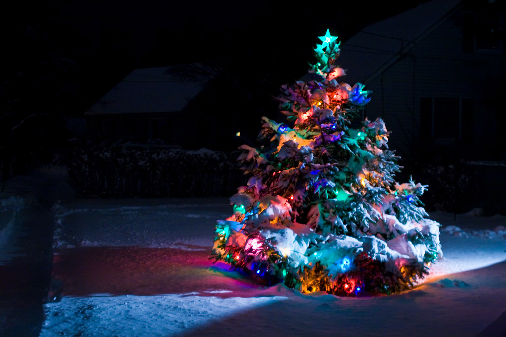 Snow Covered Christmas Tree With Multi Colored Lights At Night ...