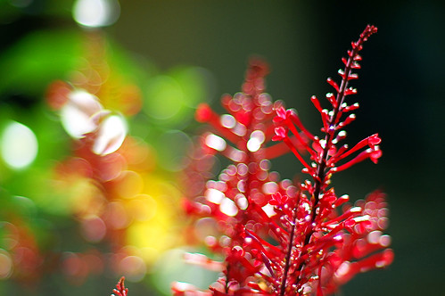 Happy in Red | by anniebluesky.•*♥