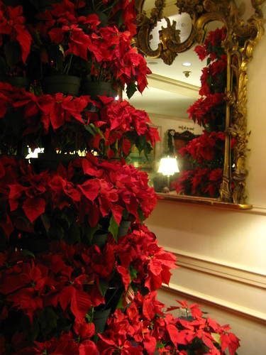 Poinsettia Tree | by Mrs. Chardonnay