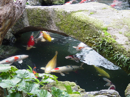 Koi pond kyoto japan saimo mx70 flickr for Koi pond japan