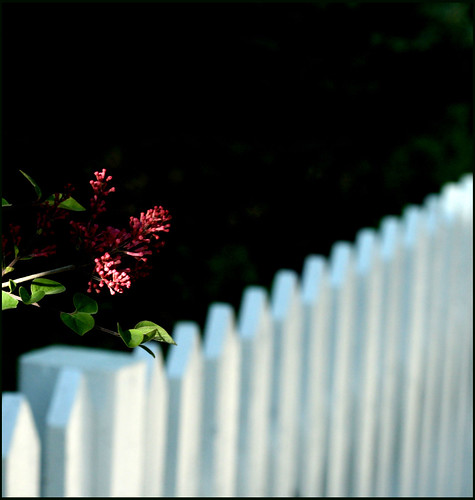 Don't fence me in ..Happy Bokeh Wednesday !! | by Maureen F.