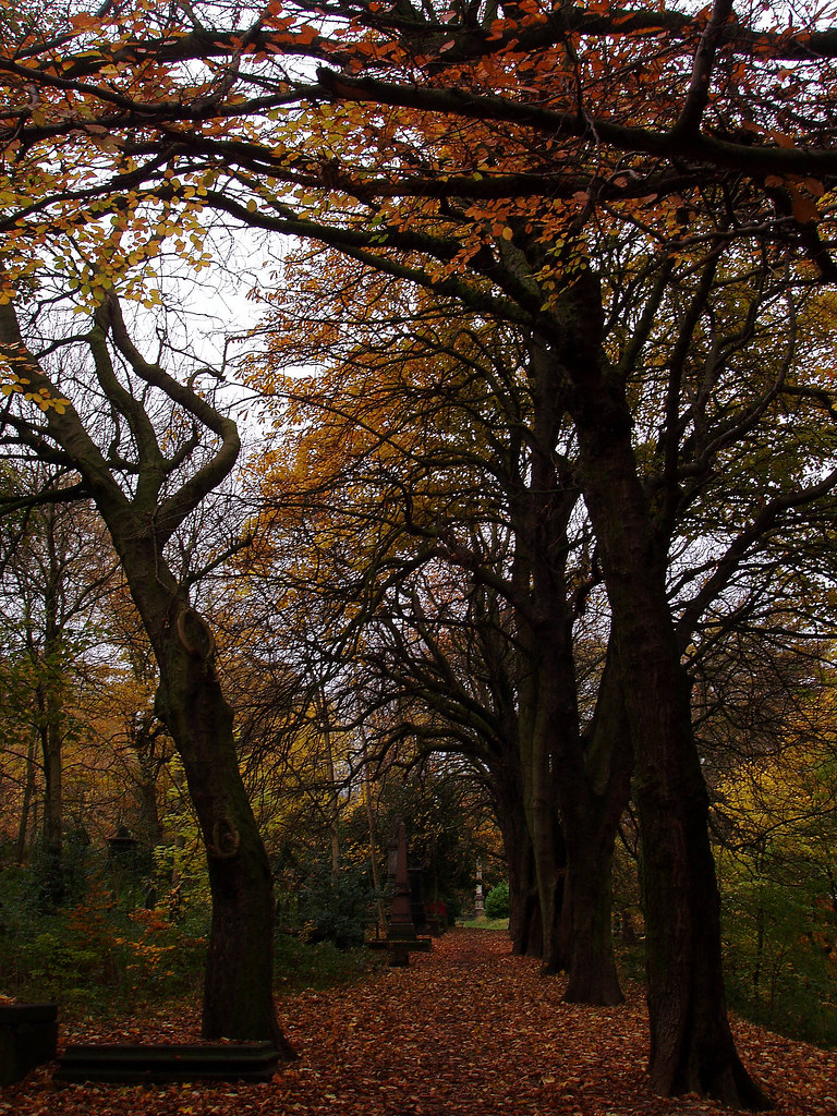 autumn in Sheffield General Cemetery – main walk