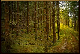 Weg in Norwegen - Norwegian woods | by NPPhotographie