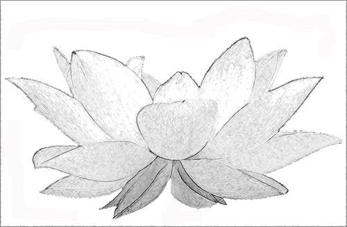 Lotus flower sketch black white white lotus by bahman farzad