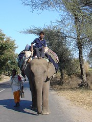 Elephant on road Rajasthan | by amanderson2