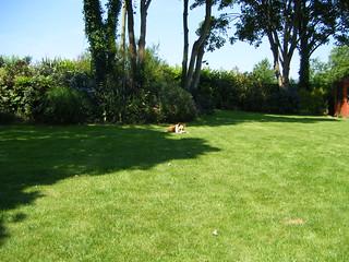 Big Dog Lawn Barryville
