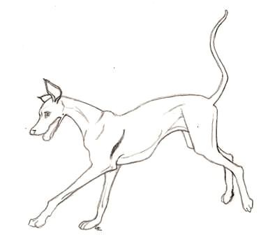 rosethistleartworks happy greyhound coloring book page by rosethistleartworks aurora