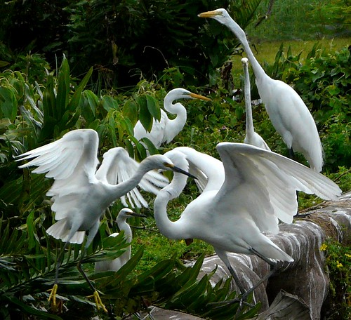 Herons & Egrets | by land.nick
