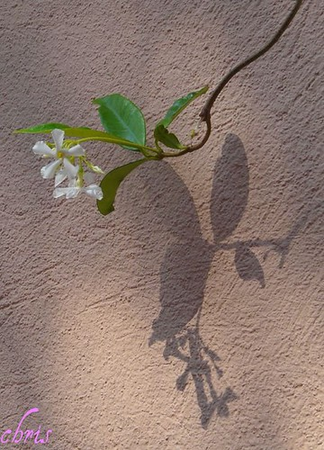 shadow on the wall ! | by CHRIS230***