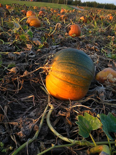 Shaded Pumpkin | by sarahbest