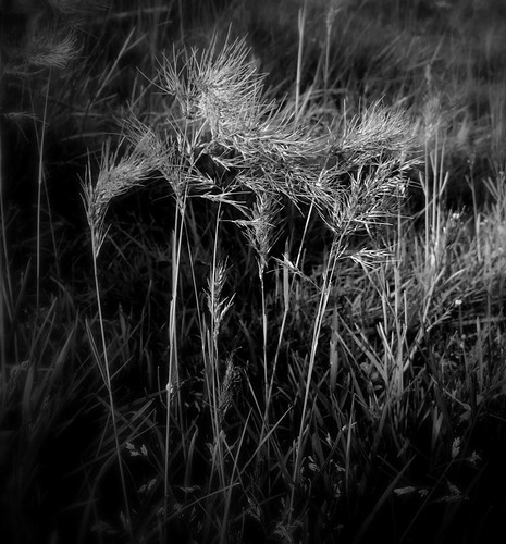 Even the Grass Is Illuminated | by Dalmatica