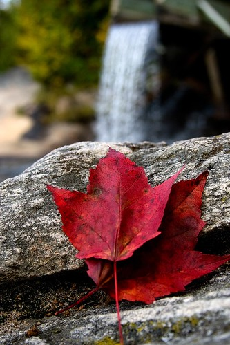 Red leaves and waterfall | by Mary Susan Smith