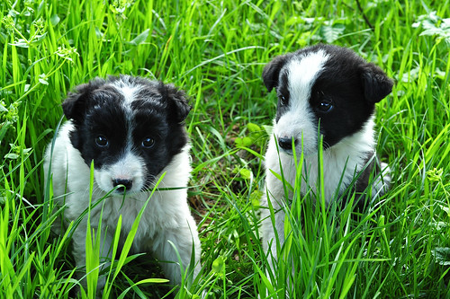 Abandoned Border Collies | by goingslowly