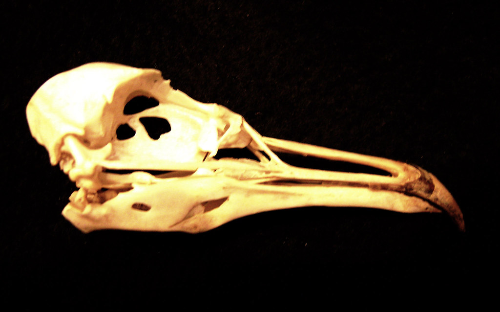 Seagull Skull Redfish Island Through Most Of The 1980s Flickr