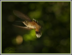 Dive Bomber | by Bev In Colorado USA