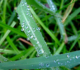rain drops :-) | by luv2photo20