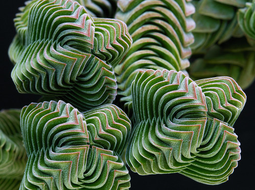 Crassula Buddha's Temple 3095 | by Benjamin XXX
