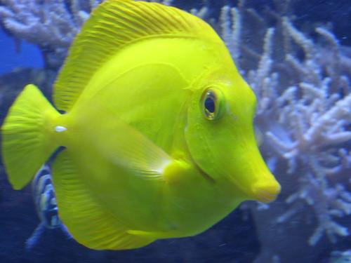 Image Result For Nc Aquarium