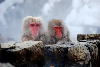 Monkeys | by ndj5