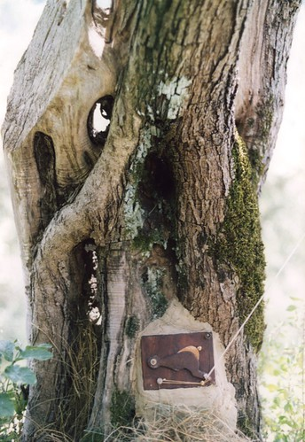 Pinhole Tree - Shutter | by Dippold