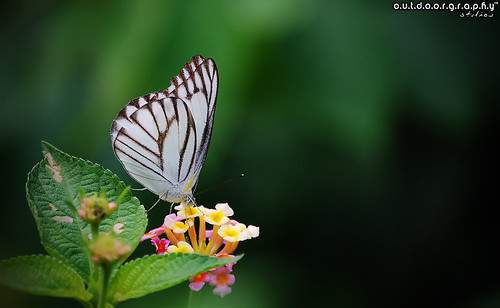 Outdoorgraphy™: Butter'Fly me Home' | by Sir Mart Outdoorgraphy™