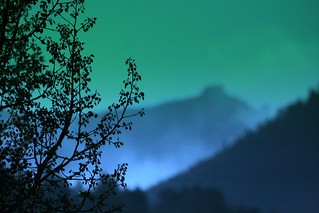 Populus tremulito (Colored Bokeh Mist - now available at Starbucks) | by jah~