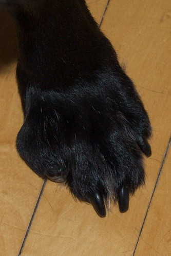 Dog Paw Swollen Red Bump