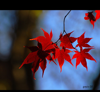 ..Red flames.. | by *Gracie