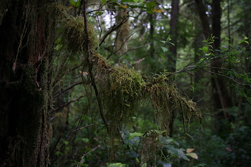Vancouver Island Rain Forest | by lumina93