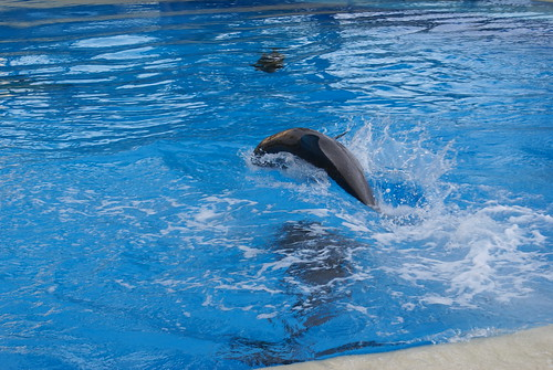 Siegfried Roy S Secret Garden And Dolphin Habitat Flickr