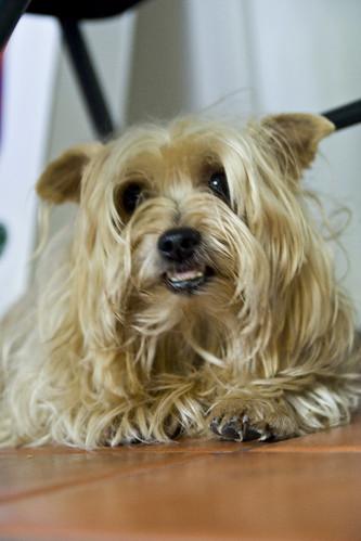 Cleo Dog Name
