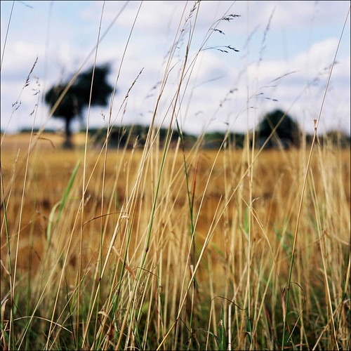 tall grass | by Andrew :-)
